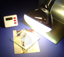 UV Curing Light